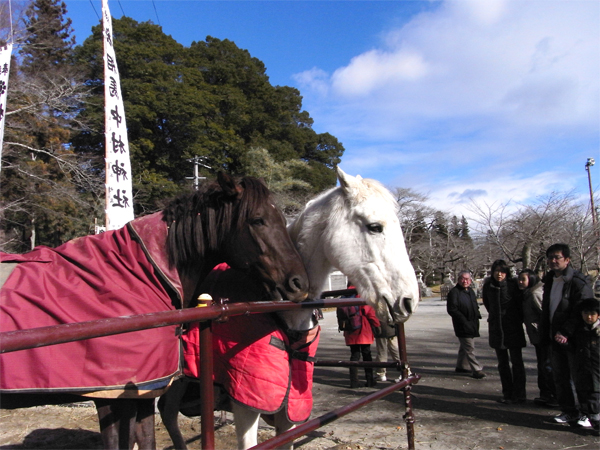 Horses at Soma Nakamura shrine