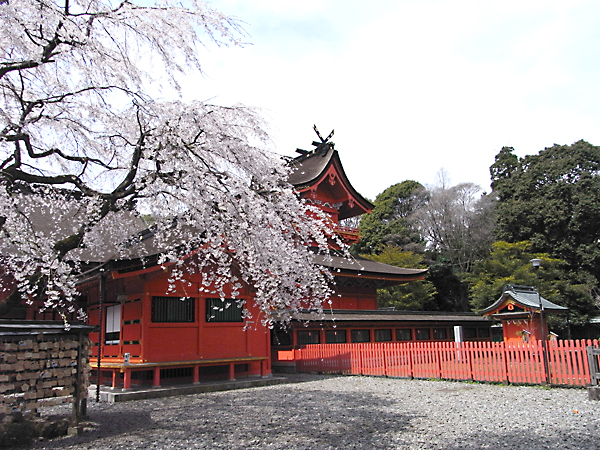 Fujinomiya Hongu Sengen Taisha and cherry blossoms